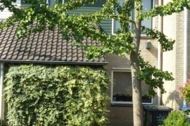 Bansingel 144 Oudenbosch