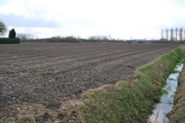 een perceel agrarische grond, gelegen aan de Zwanenburgseweg te Heeswijk-Dinther Heeswijk-Dinther