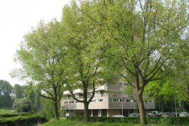Johan Willem Frisostraat 59 Zoetermeer