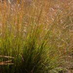 Edese Heide, Ede, hondenlosloopgebied