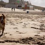 Egmond aan Zee, Egmond aan Zee, hondenlosloopgebied
