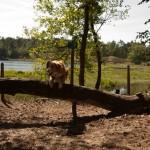 Hatertse en Overasseltse vennen, Wijchen, hondenlosloopgebied