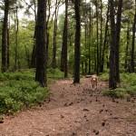 Het Leesten, Ugchelen, hondenlosloopgebied