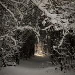 Bedafse Bergen, Uden, hondenlosloopgebied