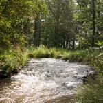 Landgoed Groenewoud, Swalmen, hondenlosloopgebied
