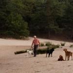 Loonse en Drunense Duinen, Loon op Zand, hondenlosloopgebied