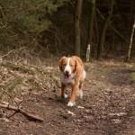 Meeuwven, Aalst, hondenlosloopgebied