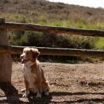 Mookerheide, Mook, hondenlosloopgebied