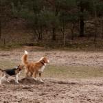 Berg van Bergharen, Bergharen, hondenlosloopgebied