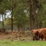 Natuurpark Maashorst, Nistelrode, hondenlosloopgebied