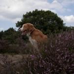 Oud Meer, Son, hondenlosloopgebied