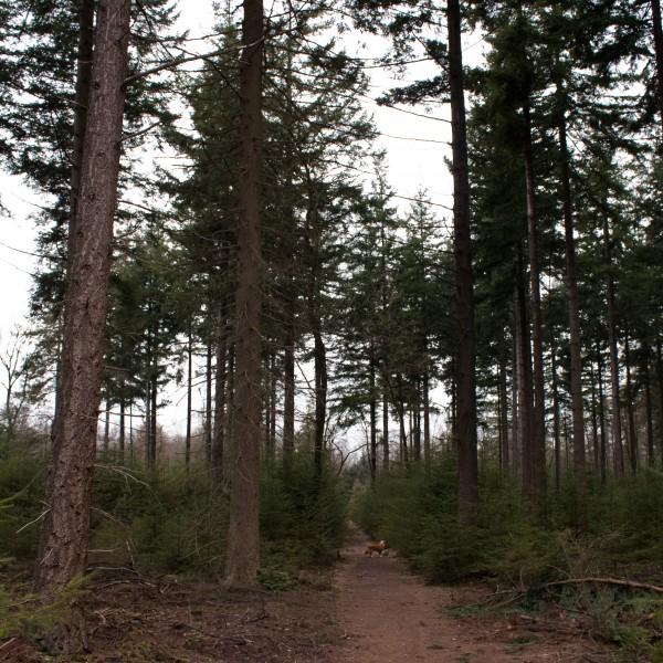 Planken Wambuis, Ede, hondenlosloopgebied