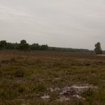 Renderklippen, Heerde, hondenlosloopgebied