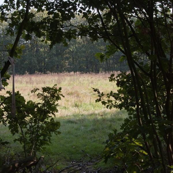 Rucphense Bossen, , hondenlosloopgebied