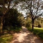 Sint Anthonisbos, Sint Anthonis, hondenlosloopgebied