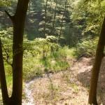 Sint-Jansberg, Plasmolen, hondenlosloopgebied