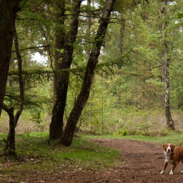 Utrechtse heuvelrug, , hondenlosloopgebied