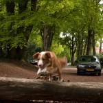 Westermeerwijk, Nijmegen, hondenlosloopgebied
