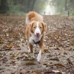 Mookerschans, Molenhoek, hondenlosloopgebied