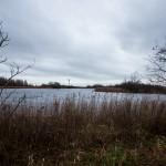 Lauwersmeer, Lauwersoog, hondenlosloopgebied
