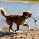 Bizonbaai, Ooij, hondenlosloopgebied