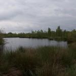 De Groote Peel, , hondenlosloopgebied