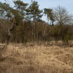 Drents-friese Wold, , hondenlosloopgebied