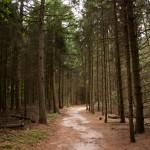 Edese bos, Ede, hondenlosloopgebied